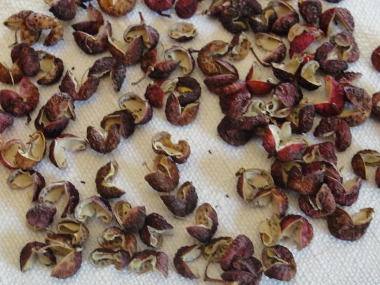 Poivre du Sichuan comestible(1)