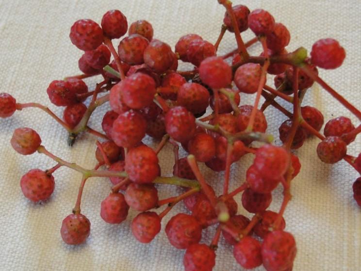 Poivre du Sichuan-fruits (3)