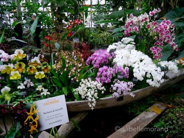 Emejing Serre De Jardin Orchidee Ideas - House Design ...