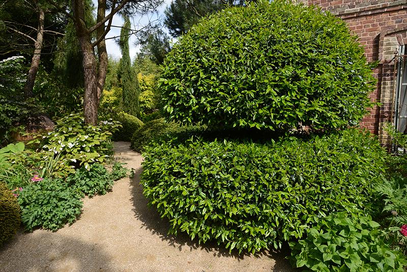 les jardins agapanthe d 39 a thomas hortus focus i mag. Black Bedroom Furniture Sets. Home Design Ideas