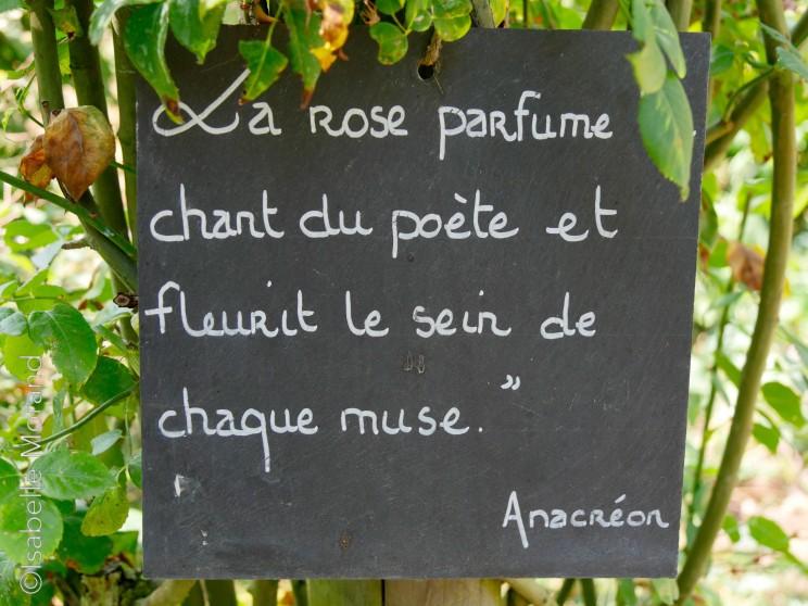 Roses anciennes : panneau eve